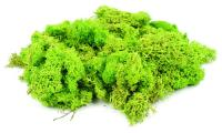 GM164 Gaugemaster Lichen Light Green 80 grams