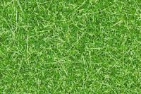 07104 Noch Static Wild Grass Bright Green 50g with 6mm high fibres